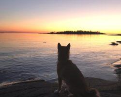 Тур по Ладожскому озеру